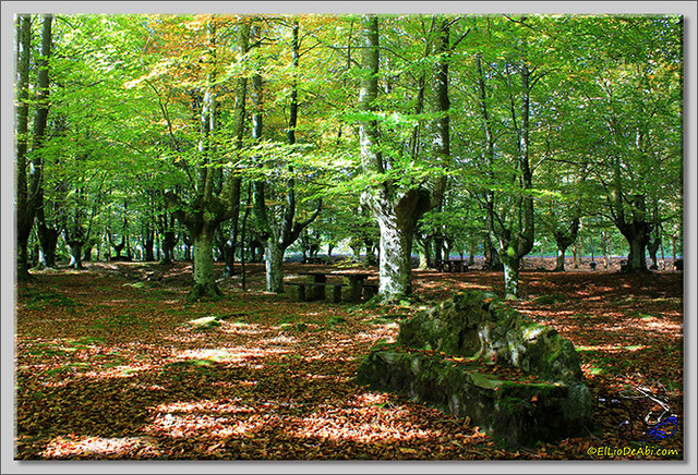 Hayedo de Presazelay (7)