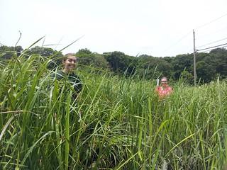 Undergraduate students Cristina Macklem and Mary Zawatski sample coastal wetland soil.