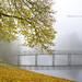 - The bridge on the pond - by Veronica Van Peet   Photography