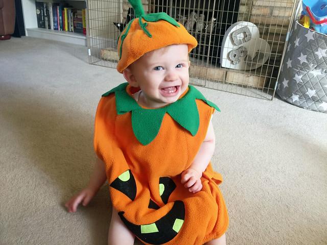 pumpkin Zachy