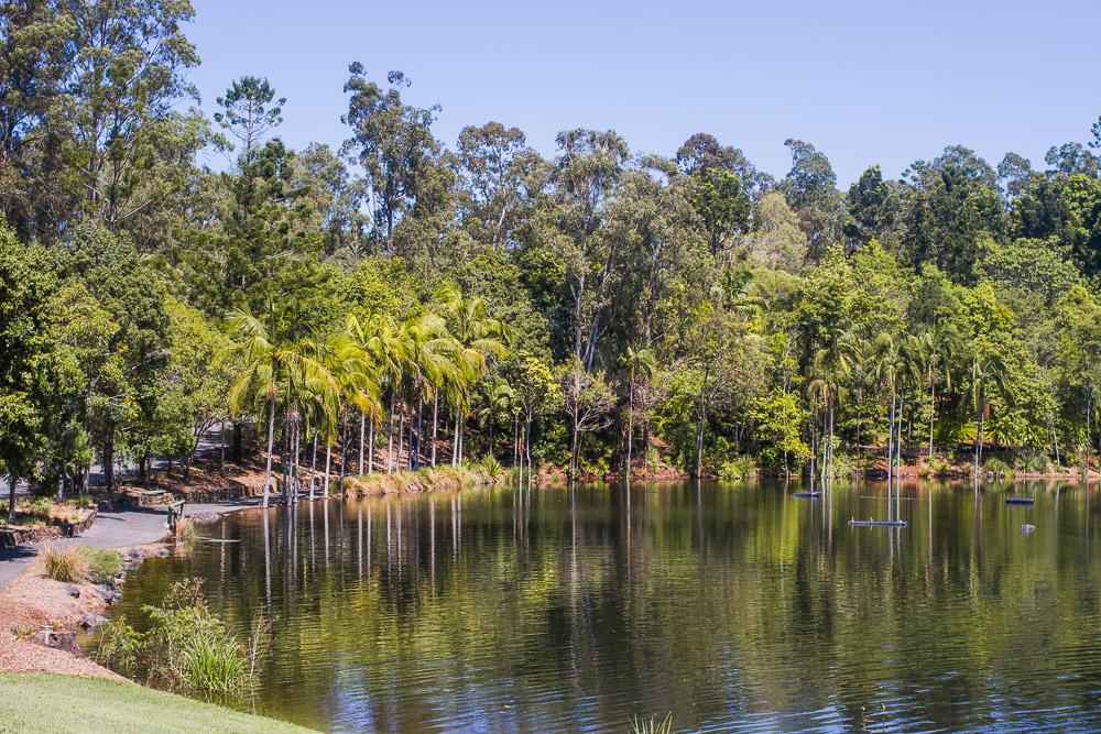 australian plant communities lake mount coot-tha botanic gardens