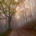 Autumn fog by Francesco Bianchi