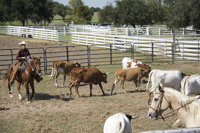 George Ranch Historical Park_207