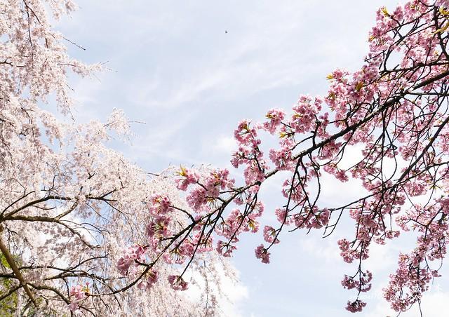 0402D8京都醍醐寺-1160316