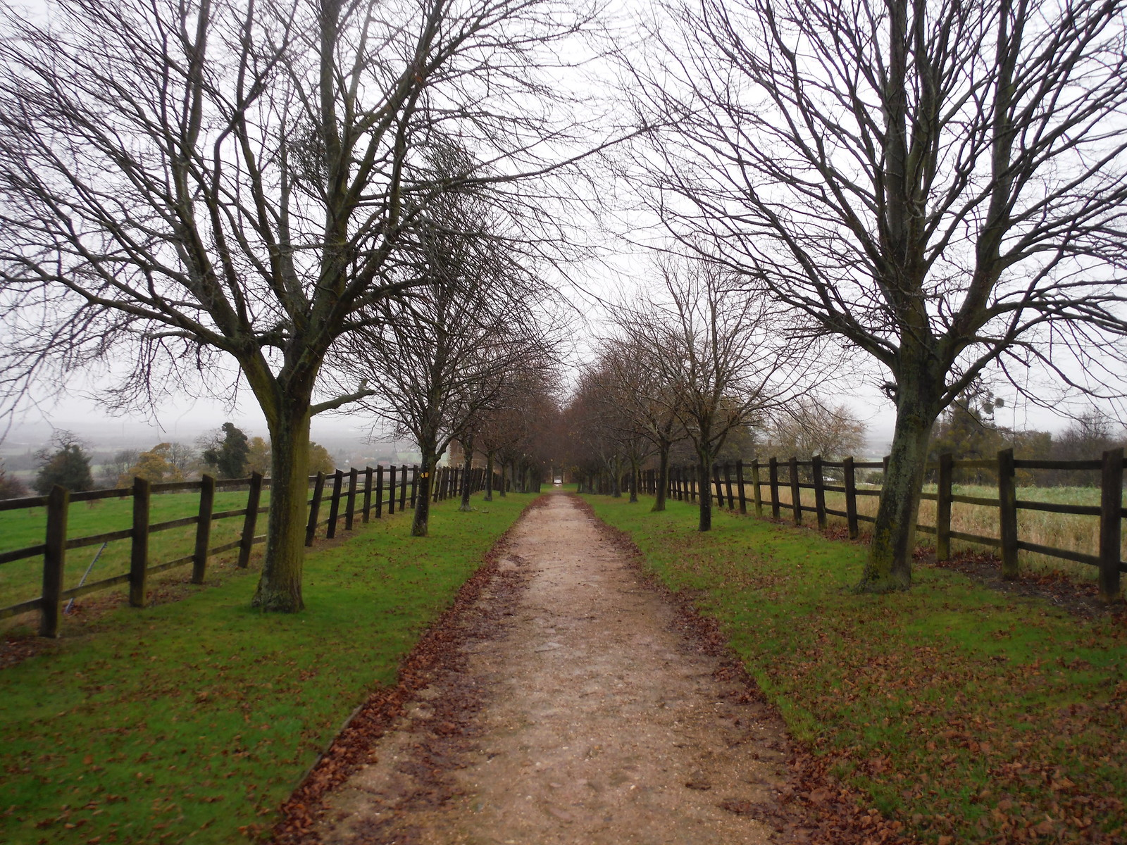 Tree-lined Avenue towards Houghton House, Ampthill SWC Walk 232 Lidlington to Flitwick