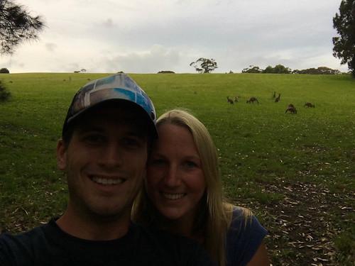 Wilde Kängurus auf dem Weg nach Canberra