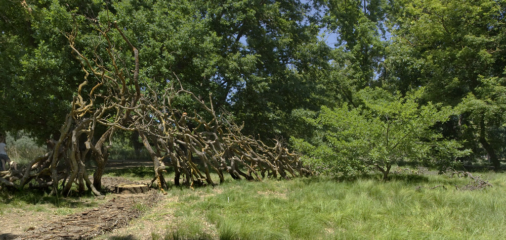 Oak Grove sculpture_Allan Jones
