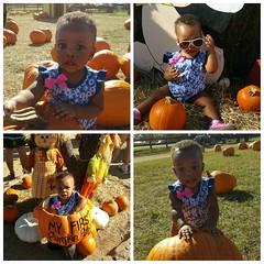 Kaeli's first pumpkin patch
