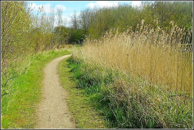 Woodland Path ..