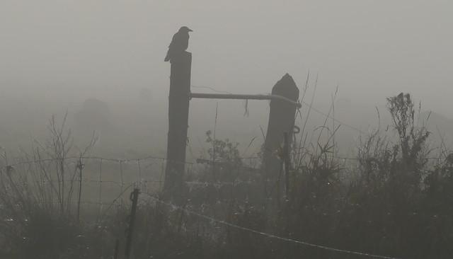 The Crow Yay..explored and, Panasonic DMC-G3, LUMIX G VARIO 100-300mm F4.0-5.6