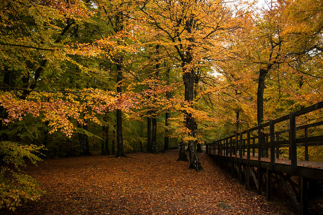 Autumn in the forest, Canon EOS 760D, Canon EF-S 18-200mm f/3.5-5.6 IS