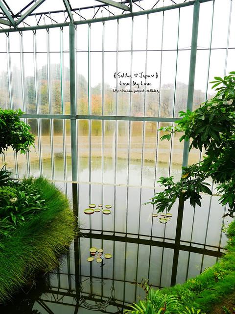 日本東京景點新宿御苑溫室植物 (11)