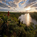Breede River Aloe Sunset by Panorama Paul