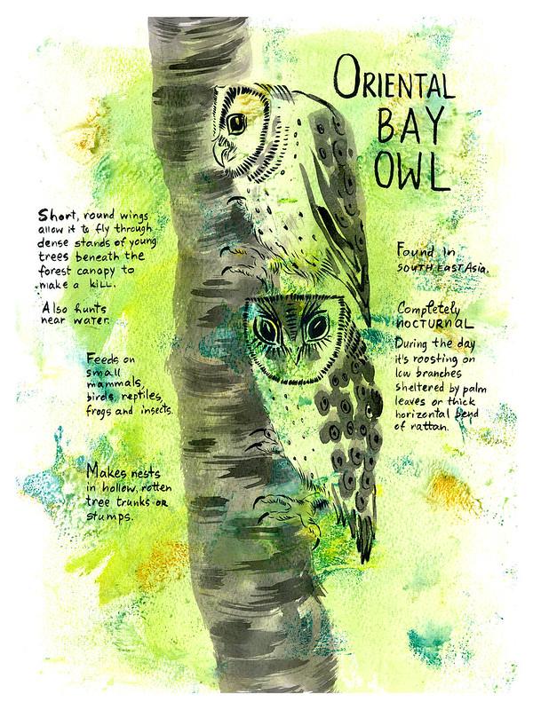 Owls_17_Oriental_Bay