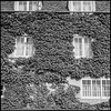 Ivy-clad wall, Broad Street
