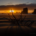 Tree in Dunes on a Windy Beach at Sunset by Jeffrey Sullivan