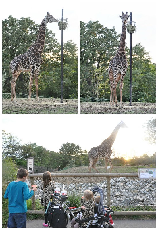 CFA Family Night at the Pittsburgh Zoo Giraffe