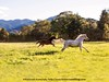 Shady Grove Horses