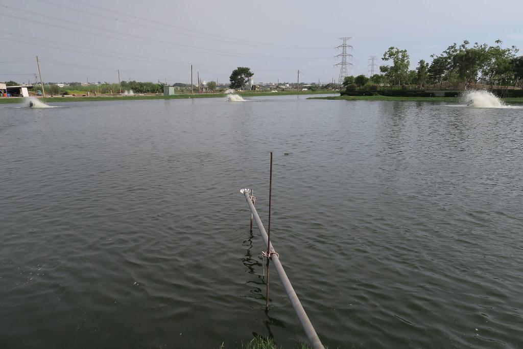 高雄市湖內區綠水塘無毒蝦 (10)