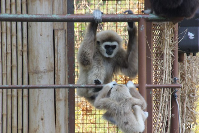 Sonntags-Besuch im Tierpark Friedrichsfelde 04.10.201573