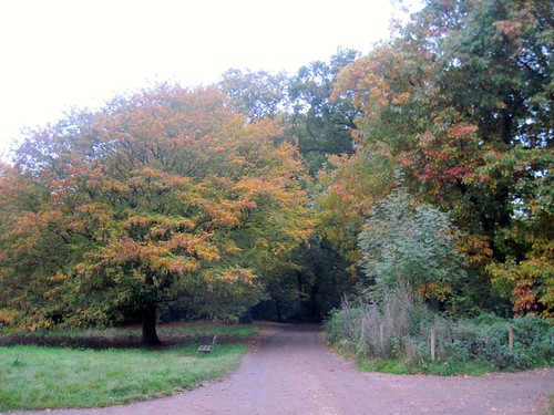 Autumn Run in the Heath