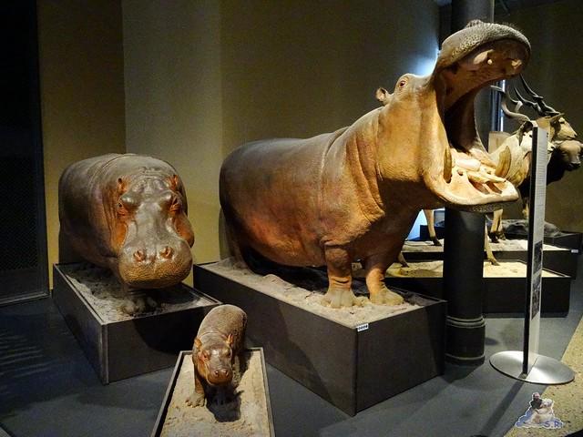 Naturkunde Museum Berlin 17.07.2015  096