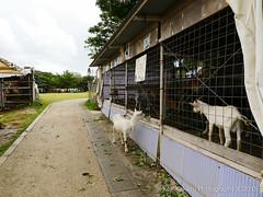 第2回大石公園ひまわり祭り2015-11