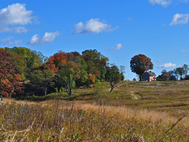Meadow Garden (10)
