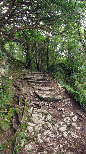 A Stone Path Leads Upwards at Killarney National Park in Ireland