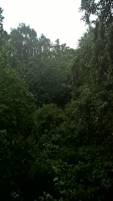 вид из окна 20 июня в половине девятого вечера | ХорошоГромко.ру