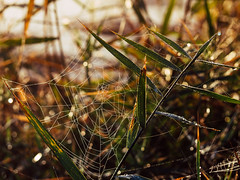 Flickr Friday: #AutumnLeaves