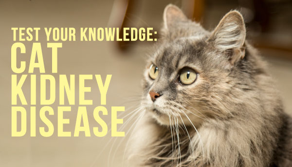 cat-kidney-disease-quiz