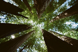 big basin redwoods | by Jordan Satmary