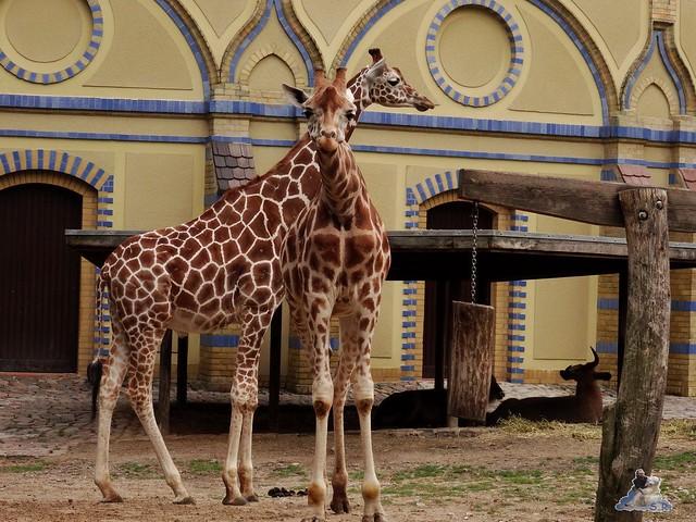 Zoo Berlin 28.08.2015  012