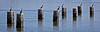 Seven Birds/Eight Pilings by Gliderjohn
