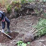 05_Preparing planting hole