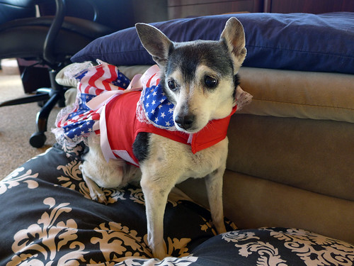 2015-10-17 - Mags (isn't feeling too patriotic) - 0009 [flickr]