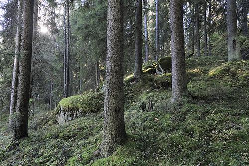 forest suomi finland landscape forestry maisema metsä fsc biodiversity