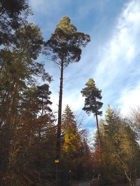Trees, Fujifilm FinePix S4500