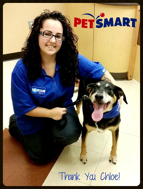 Teutul #PetSmart Grooming - Lapdog Creations #ad