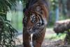 Photo:Sendai Yagiyama Zoological Park By hondahsv010gt