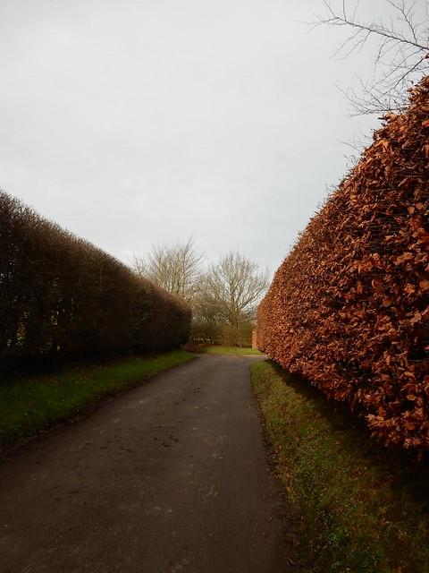 Twixt hedges