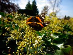Butterfly à la musée de l'Elysée