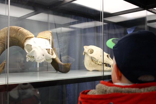 Mineralienmuseum Jan 2016