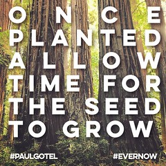 Once planted allow time for the send to grow #paulgotel #evernow