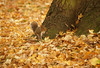 Kneller Gardens - Squirrel