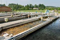 Bassins de la pisciculture de la Calonne