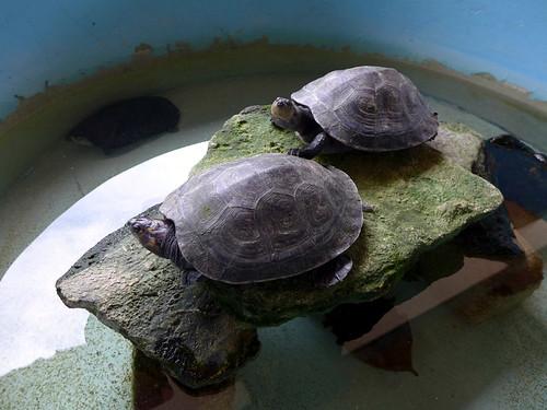 Centro Mexicano de la tortuga - Mazunte