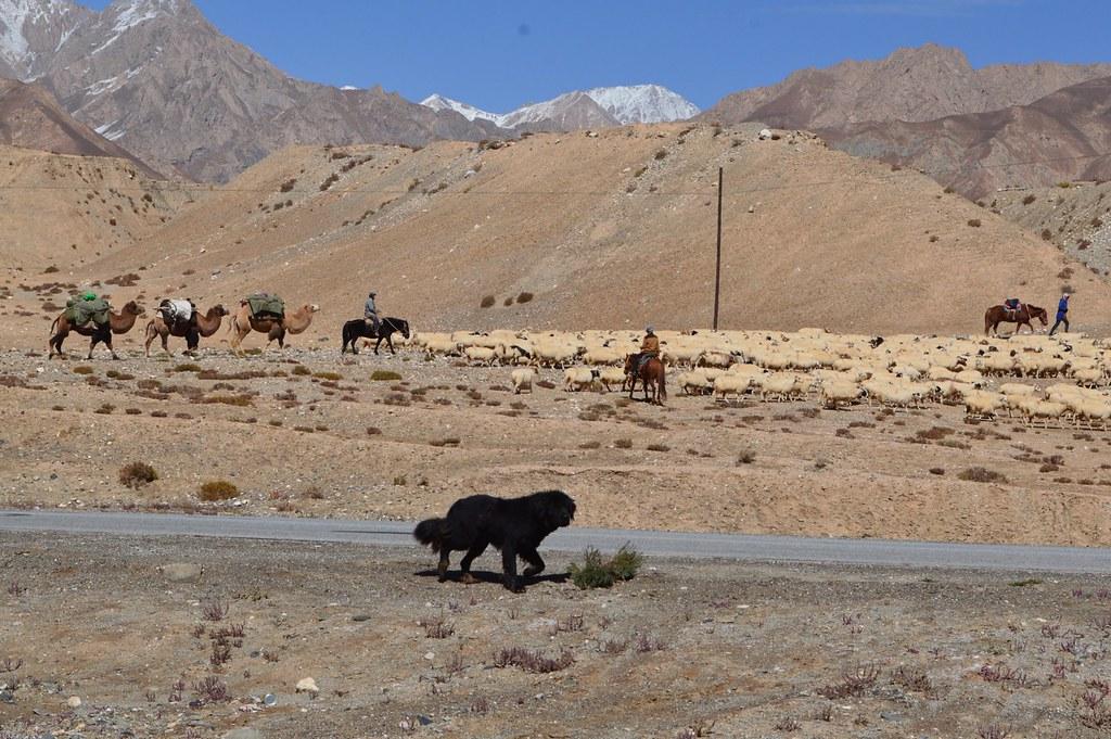 Scenery Qinghai-Tibet Highway