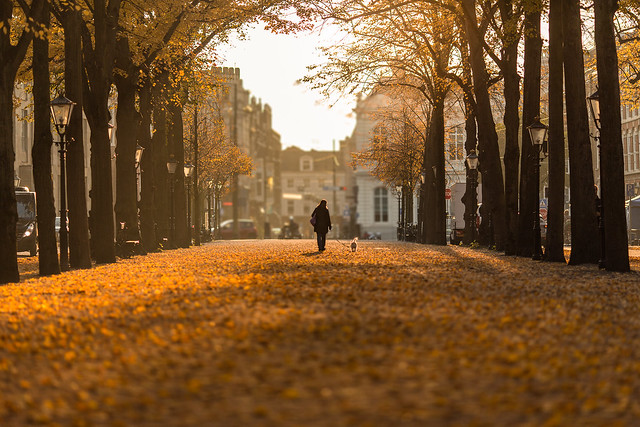 Autumn day in The Hague - Explored